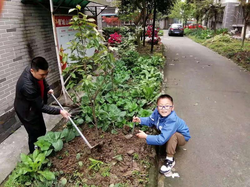 我为地球种棵树1