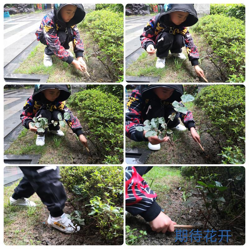 我为地球种棵树6